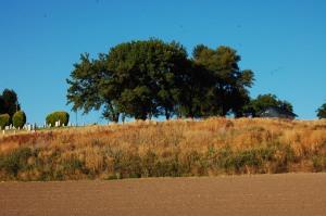 Palouse graveyard