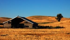 Palouse barns