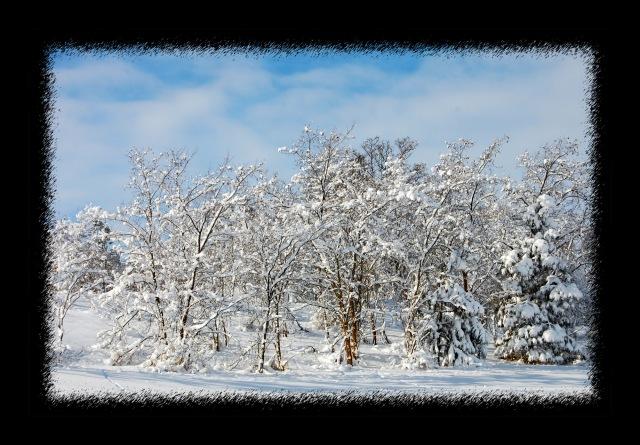 WinterA0001
