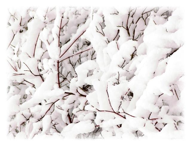 winter50001