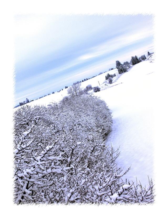 winter50002