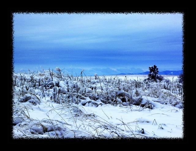 winter50003